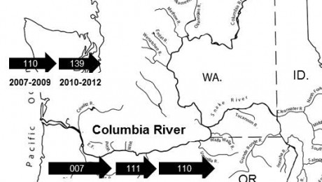 Genotype displacement events in the lower Columbia River basin and Washington state coast. The Columbia River basin located in Washington (WA), Idaho (ID), and Oregon (OR). Arrows represent dominant genotypes present in each region. Dates of dominance are shown below arrows.